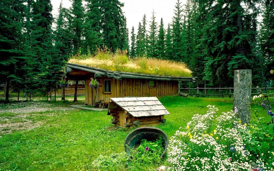 Avantages des toits verts